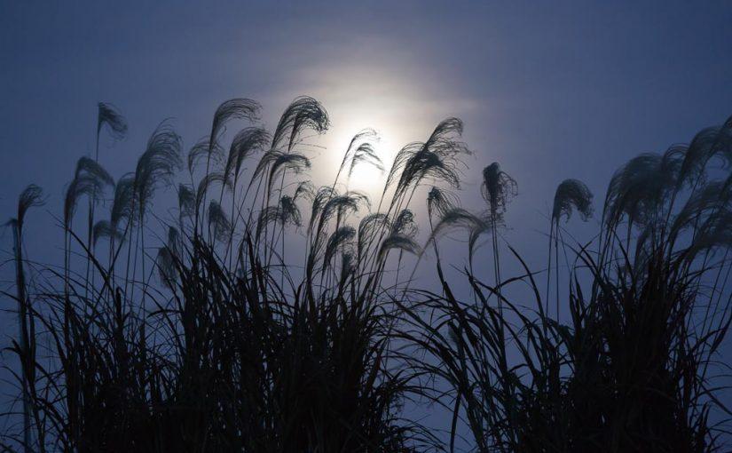 月明りとススキ