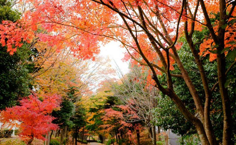 紅葉している港北の緑道