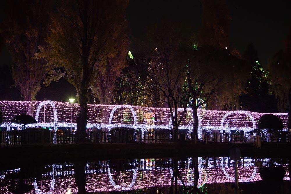 光のトンネルが池に映る