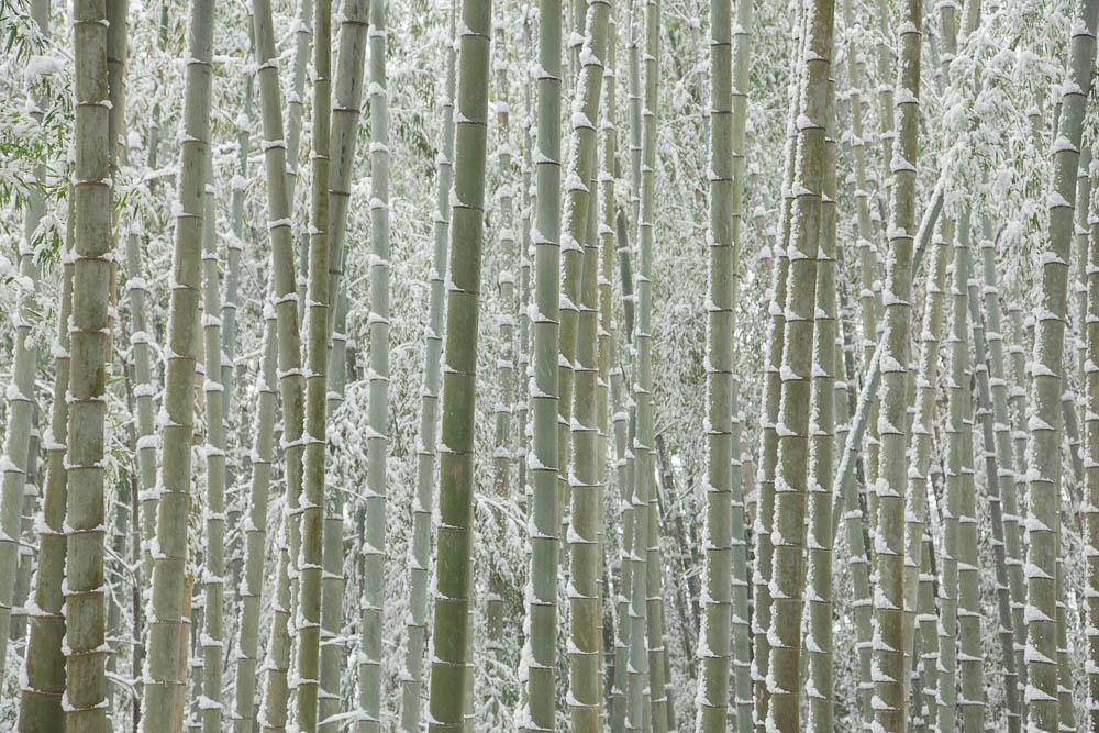 雪の竹林カーテン